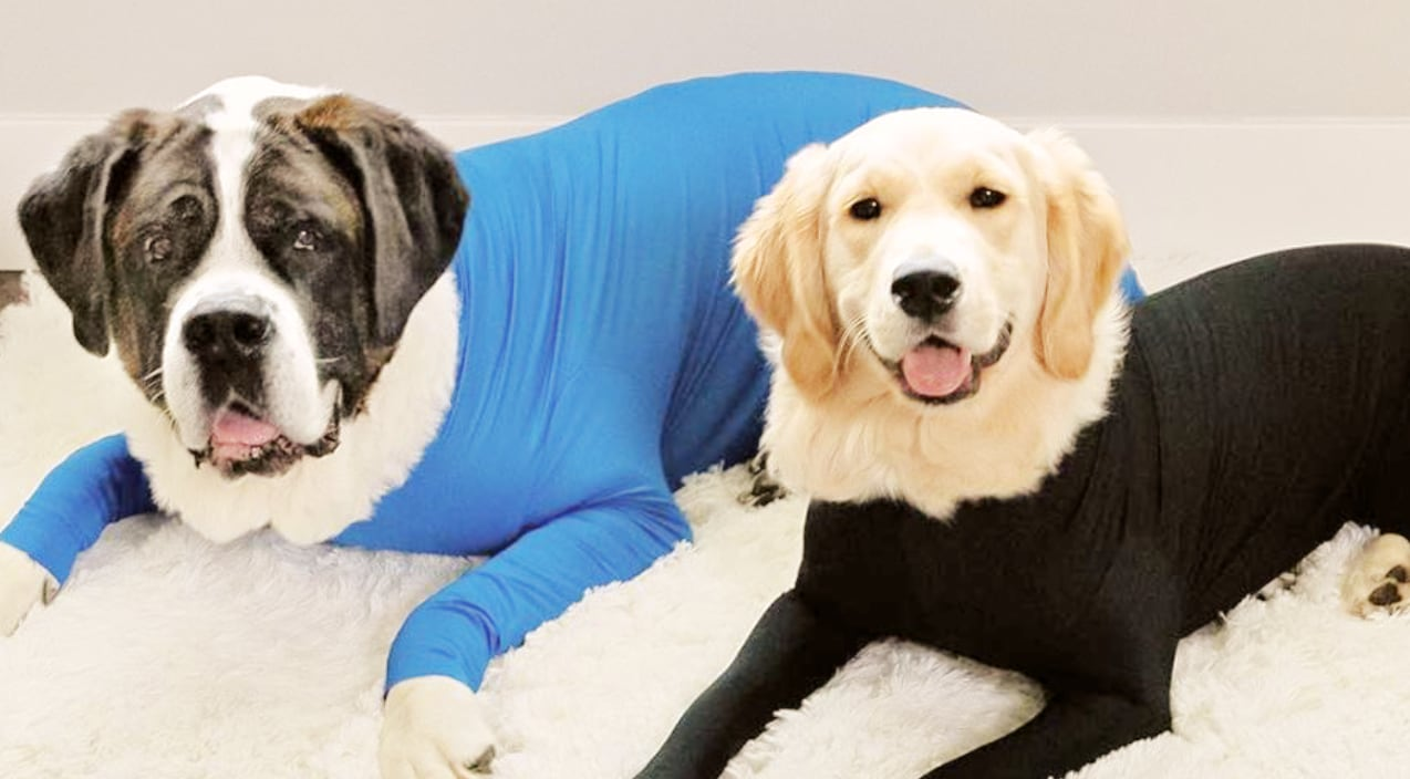 Dog Onesies Are Now A Thing Amp They Stop Your Pup S Never
